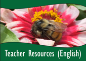 SBTN-teacherresourcesenglish.png